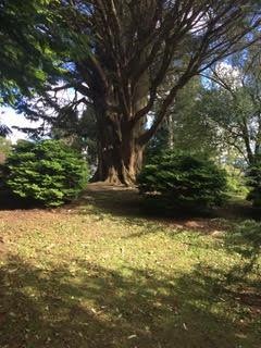 tree_ireland-hiya
